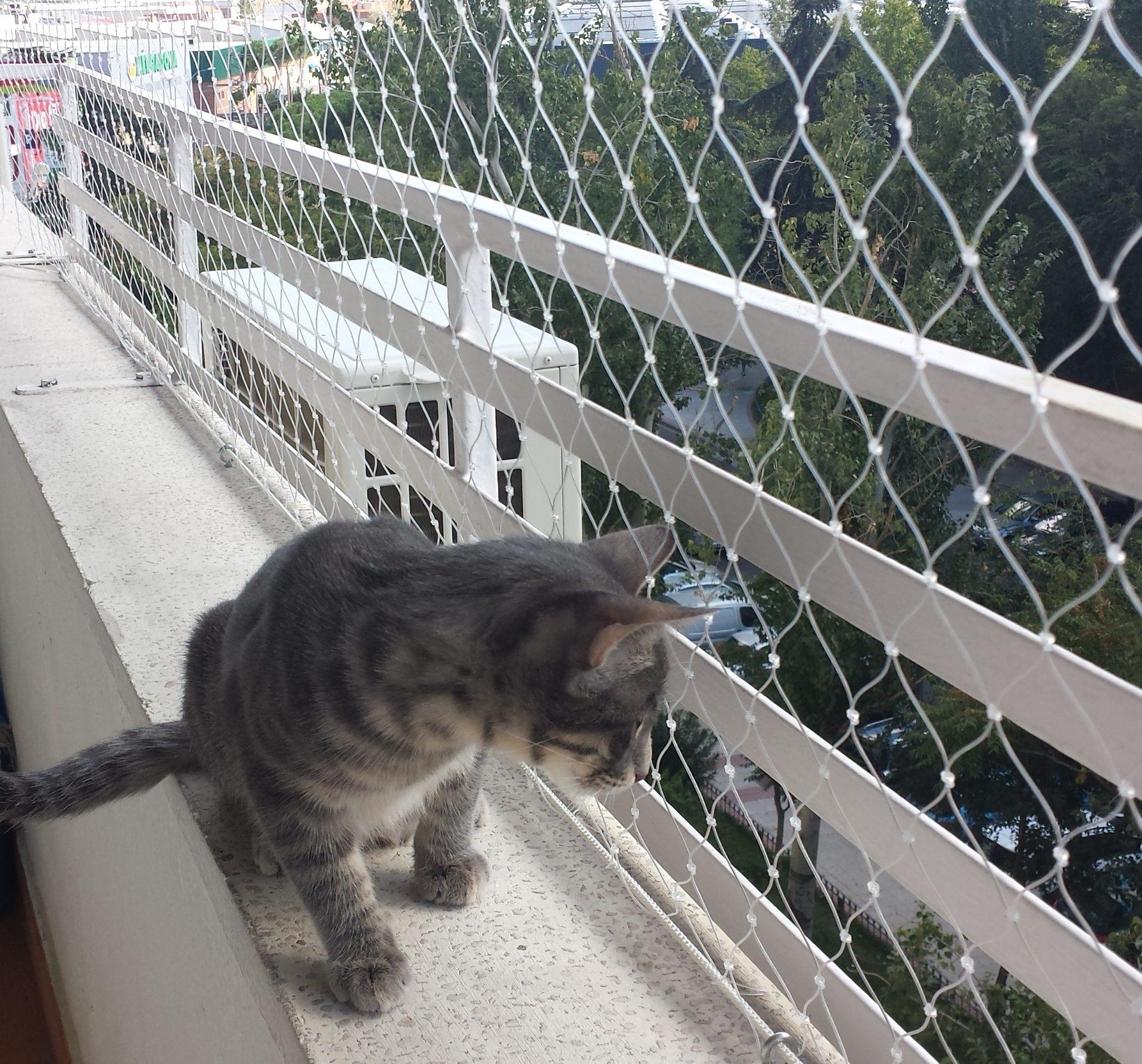 malla ventanas gatos