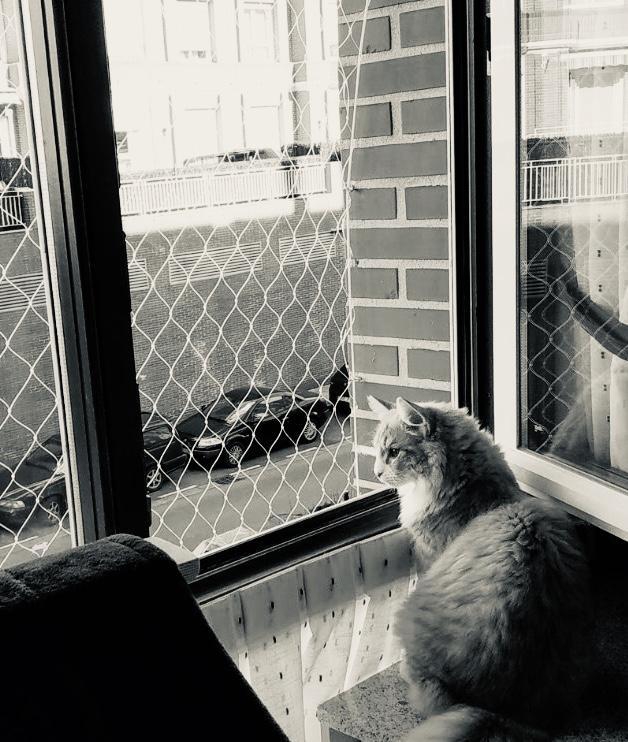 Mallas mosquiteras para gatos