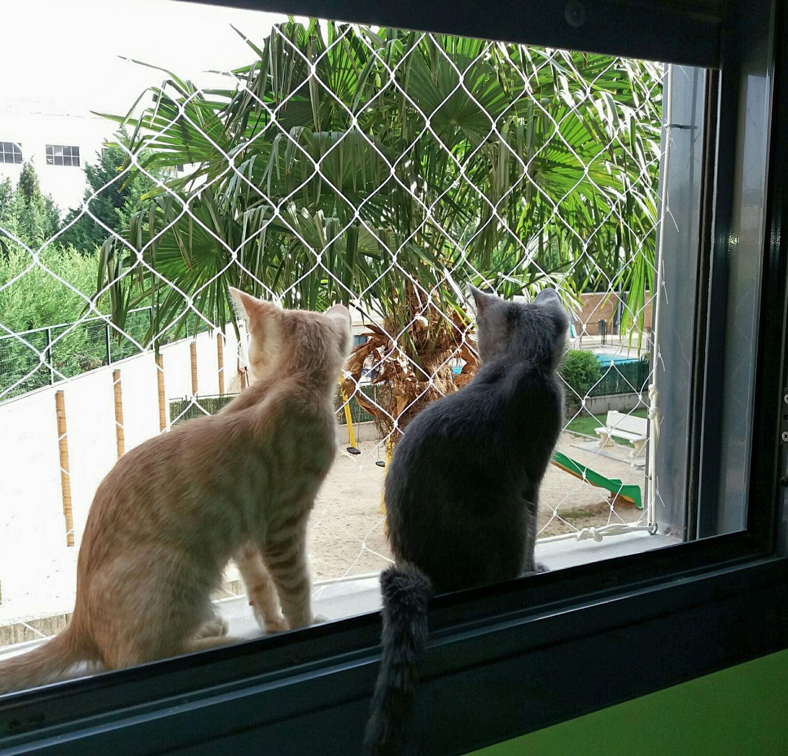 redes protección gatos. Ventanas y balcones seguros