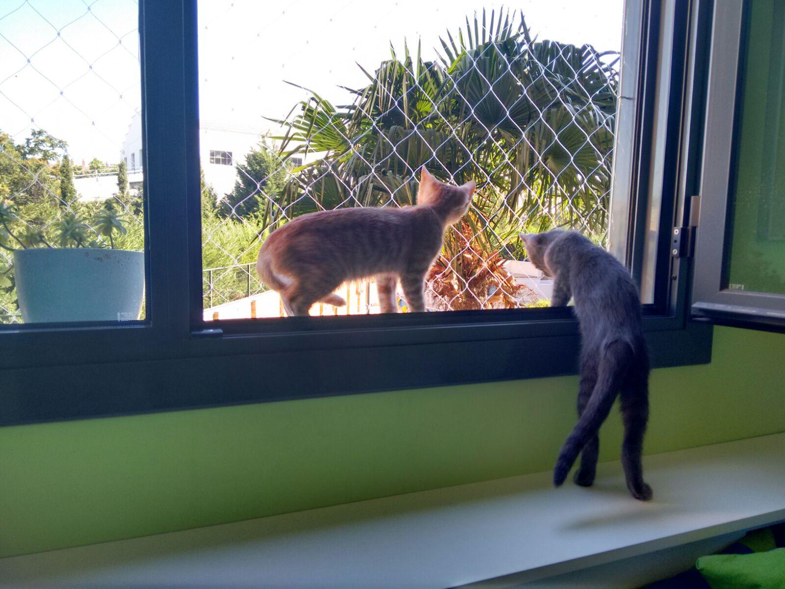 Mallas para ventanas y balcones para gatos