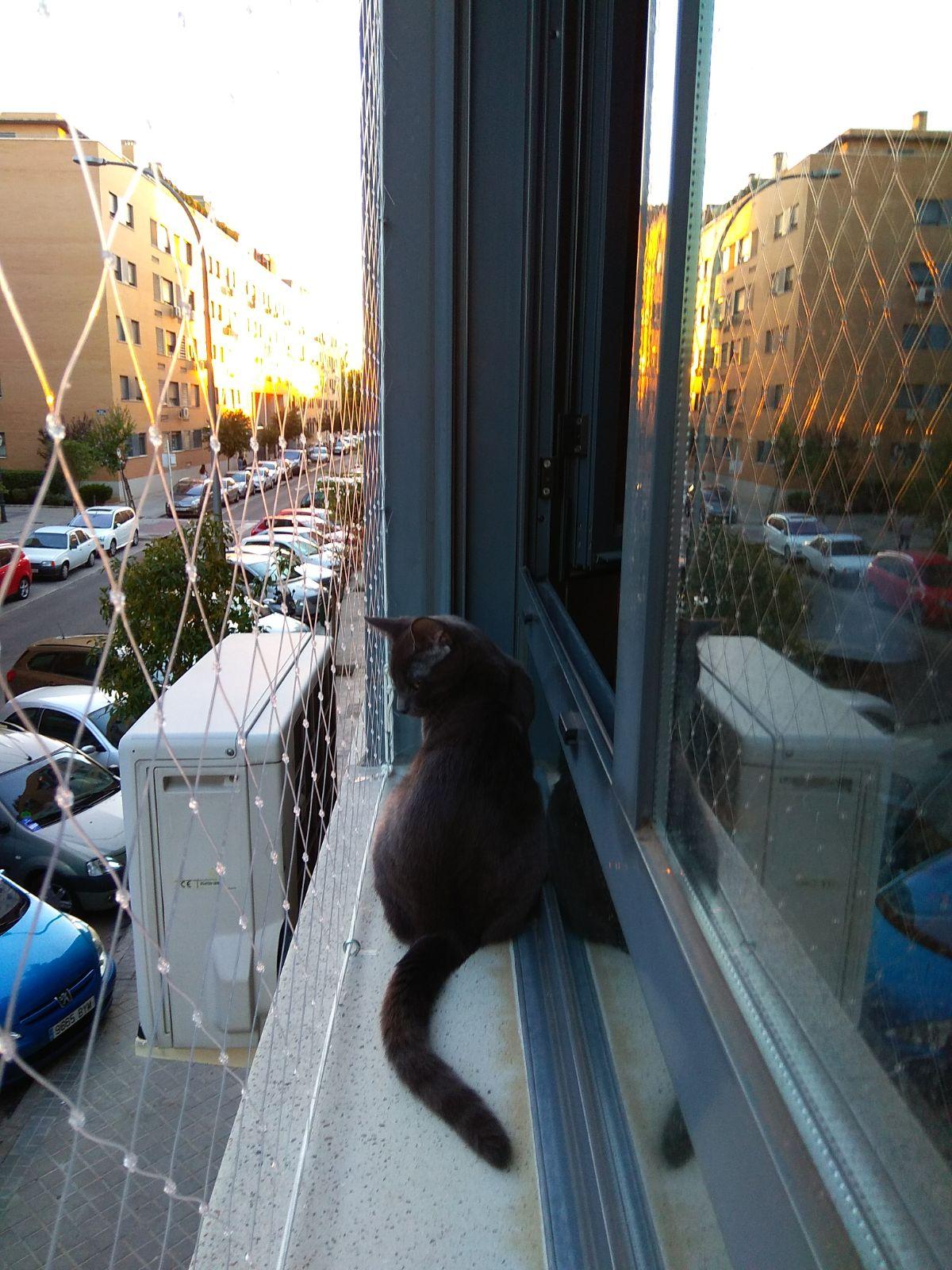 Protección para gatos balcones y ventanas