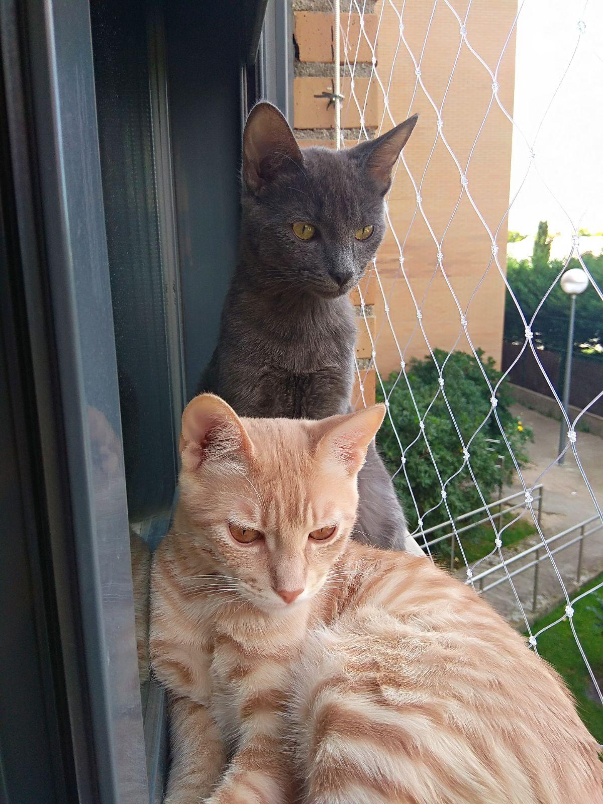 Mallas protección para gatos en ventanas y balcones
