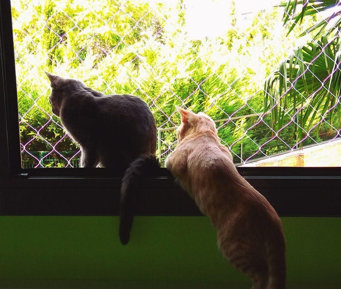Red seguridad para gatos. En ventanas y balcones
